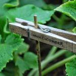 Kilka pomysłów do ogrodu