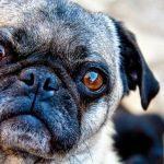 Dlaczego pies zawsze będzie lepszy od teściowej? Studium przypadku