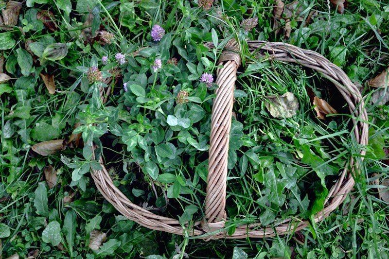 na dwor czy na pole, idziemy na pole, na dworzu czy na dworze, produckt, elfia bluza, zara, buty ccc, loki,