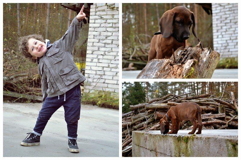 pies, kora, posokowiec