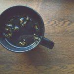 Osy, szerszenie, pszczoły – kilka prostych zasad jak z nimi żyć