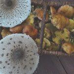 Czy na Mazurach są grzyby?