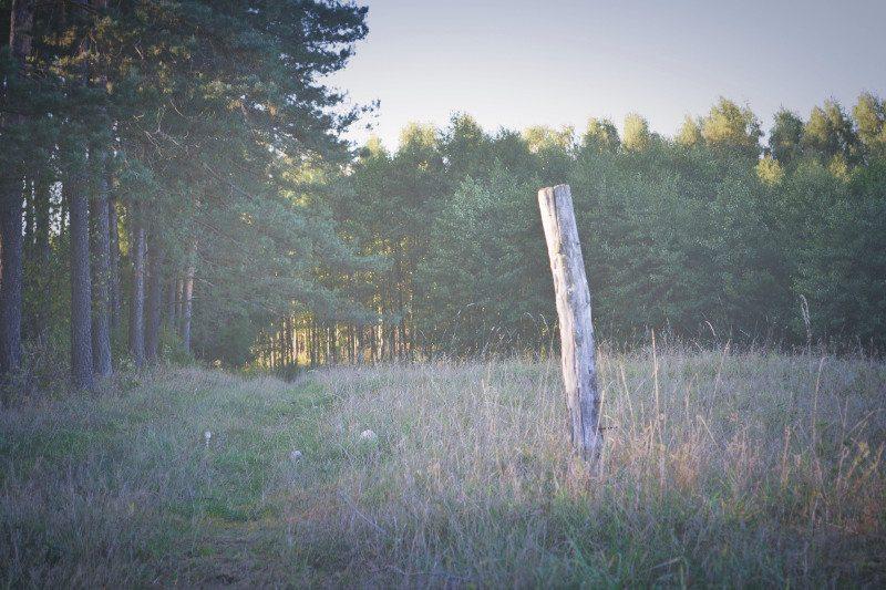 Czy warto mieszkać w lesie?