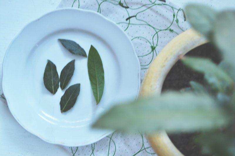 Własna uprawa liści laurowych