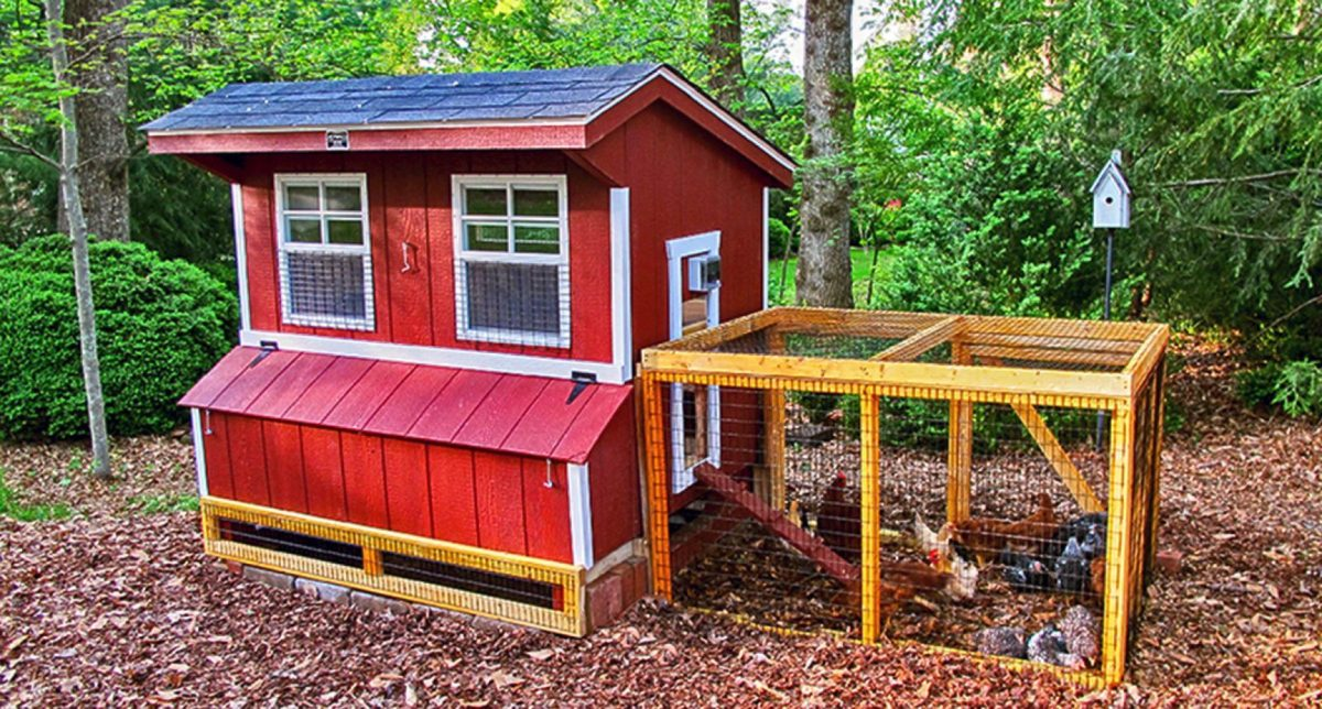 chicken-coop-5x6-with-chicken-run-2