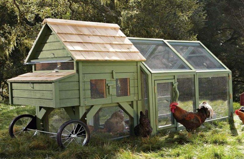 Nie uwierzysz, jak pięknie mogą mieszkać… kury