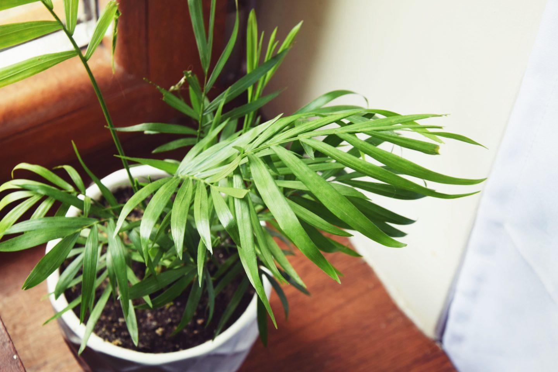 zdrowe rośliny do domu