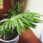 Pożyteczne i zdrowe rośliny do domu, które oczyszczą powietrze, wyleczą i poprawiają nastrój