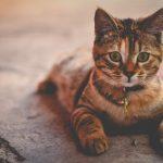 5 rzeczy, które musisz zrozumieć, żeby przygarnąć kota z fundacji i odpowiedzialnie zajmować się zwierzęciem