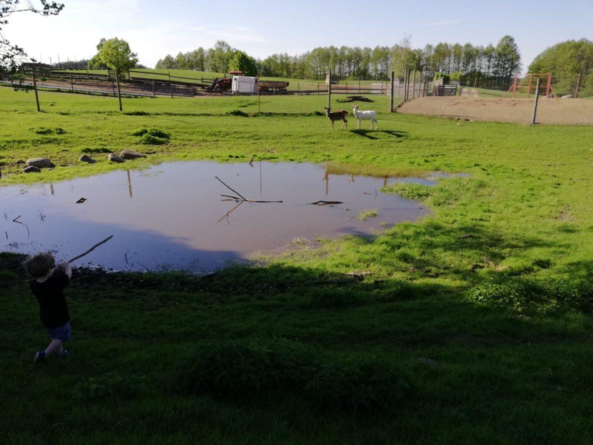 ferma jeleniowatych w Kosewie