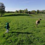 Ferma jeleniowatych w Kosewie – bo mało nam własnych jeleni pod domem